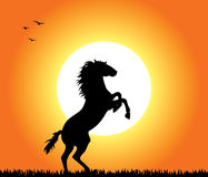 Het Grootbrengen van het paard bij Zonsondergang Royalty-vrije Stock Foto