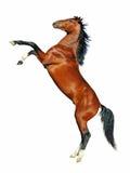 Het grootbrengen van paard op witte achtergrond Stock Foto's