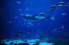 Het grootste aquarium van de Wereld in Atlanta Georgië de V.S. stock afbeeldingen
