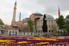 Het Grootste Tapijt van Tulpen de Wereld in Sultanahmet, Istanboel Stock Foto's