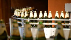 Het grote aantal glasflessen met bier beweegt zich langs de transportband Lage alcoholproductie De dranken zijn klaar te eten stock video