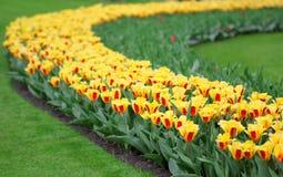 Het grote bedrag kleurrijke tulpen in de lente Stock Fotografie