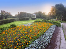 Het grote bloembed met goudsbloem bloeit (Tagetes) in park op een zonsondergang Royalty-vrije Stock Foto's