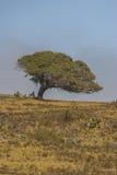 Het Grote Eiland Hawaï van de Kolhalakust Stock Afbeelding