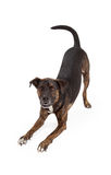 Het grote Hond Stokvoering en Glimlachen royalty-vrije stock afbeeldingen