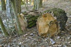 Het grote hout Stock Foto's