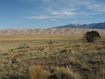 Het grote Nationale Park van de Duinen van het Zand Royalty-vrije Stock Foto's
