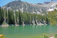 Het grote Nationale Park van het Bassin, Nevada Stock Foto's