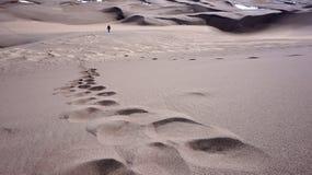 Het grote Nationale Park van Zandduinen Royalty-vrije Stock Fotografie