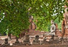 Het grote oude standbeeld van Boedha in geruïneerde oude tempel Stock Afbeelding
