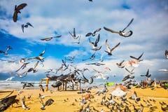 Het grote pak duiven stock afbeeldingen