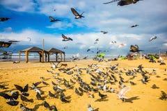 Het grote pak duiven vliegt omhoog van strand royalty-vrije stock foto