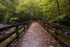 Het grote Rokerige nationale park van Bergen stock foto