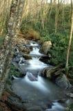 Het grote Rokerige Nationale Park van Bergen Royalty-vrije Stock Foto