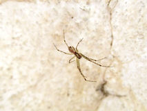 Het grote spin hangen Royalty-vrije Stock Foto