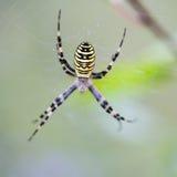 Het grote spin hangen op zijn Web Royalty-vrije Stock Foto's