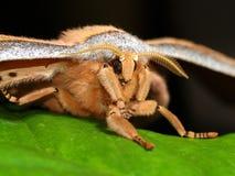 Het grote Tropische Portret van de Vlinder Stock Foto