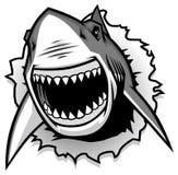 Het grote Witte Haai scheuren met geopende mond Stock Afbeeldingen