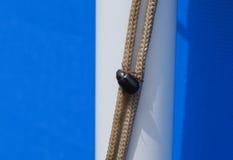 Het grote zwarte insect zit op een kabel Royalty-vrije Stock Foto