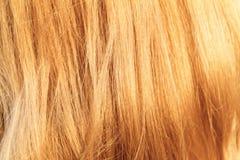 Het Haar van de blonde Royalty-vrije Stock Foto's