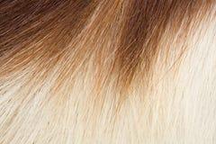 Het haar van de springbok Royalty-vrije Stock Foto