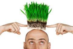Het haar van het gras Stock Afbeeldingen