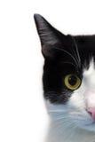 Het halve gezicht van de kat Stock Foto
