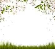 Het halve kader van kersenbloemen en groen gras Stock Fotografie
