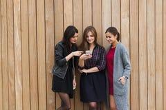 Het halve lengteportret van schitterende dames kleedde zich in in kleren gebruikend celtelefoon tegen achtergrond van het exempla stock foto's