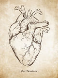 Het hand getrokken correcte menselijke hart van de lijnkunst anatomisch Da Vinci-schetsenstijl over grunge verouderde document ac Royalty-vrije Stock Afbeeldingen