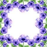 Het hand getrokken kader van waterverf violette anemonen royalty-vrije illustratie