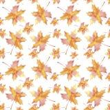 Het hand getrokken naadloze blad van de de esdoorndaling van de patroonwaterverf kleurrijke op witte achtergrond stock illustratie