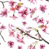 Het hand Getrokken naadloze patroon van Cherry Blossoms Stock Afbeeldingen