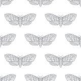 Het hand getrokken vector naadloze patroon van de haviksmot Royalty-vrije Stock Afbeelding