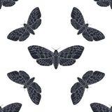 Het hand getrokken vector naadloze patroon van de haviksmot Royalty-vrije Stock Afbeeldingen