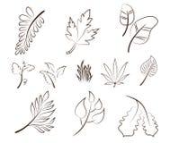 Het hand getrokken vectorontwerp van het bladerenelement Stock Afbeeldingen