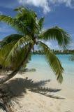 Het hangen van de palm over Wit Strand Stock Foto