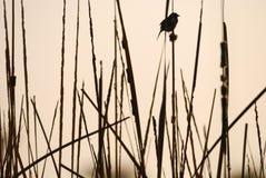 Het Hangen van de vogel bovenop sommige Takken Stock Foto's