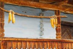 Het hangen van Droge maïskolf op de muur royalty-vrije stock afbeelding