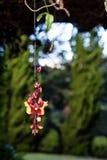 Het hangen van rode en gele bloem met groene pijnbomen als achtergrond Stock Foto