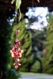 Het hangen van rode en gele bloem met groene pijnbomen als achtergrond Stock Fotografie