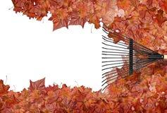 Het harken van bladeren Royalty-vrije Stock Foto