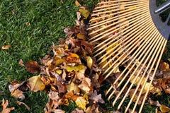 Het harken van bladeren. Stock Fotografie