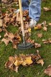 Het harken van Bladeren Stock Fotografie
