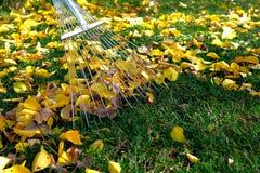 Het harken van bladeren met ventilatorhark van het gazon Royalty-vrije Stock Afbeeldingen
