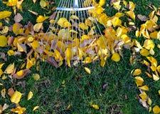 Het harken van bladeren met ventilatorhark van het gazon Stock Afbeelding