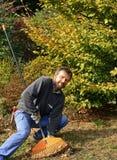 Het harken van de herfstbladeren Stock Foto