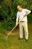 Het harken van het gras Stock Foto