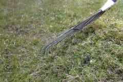 Het harken van mos op een gazon stock foto