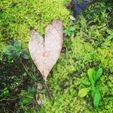 Het hart die van de bladliefde op bed van mos leggen Stock Foto